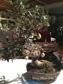 6 Roca Olive Tree_new