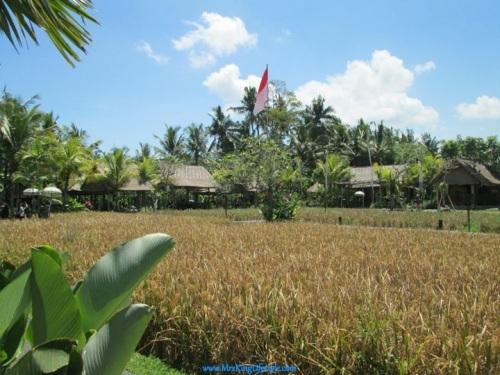6Bali Bebek Tepi Sawah paddy fields