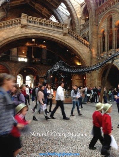 naturalhistmuseum_new